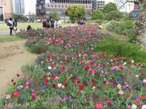 新港中央広場の花2