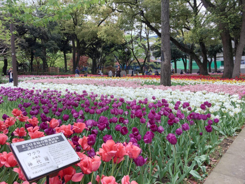 横浜公園の花1