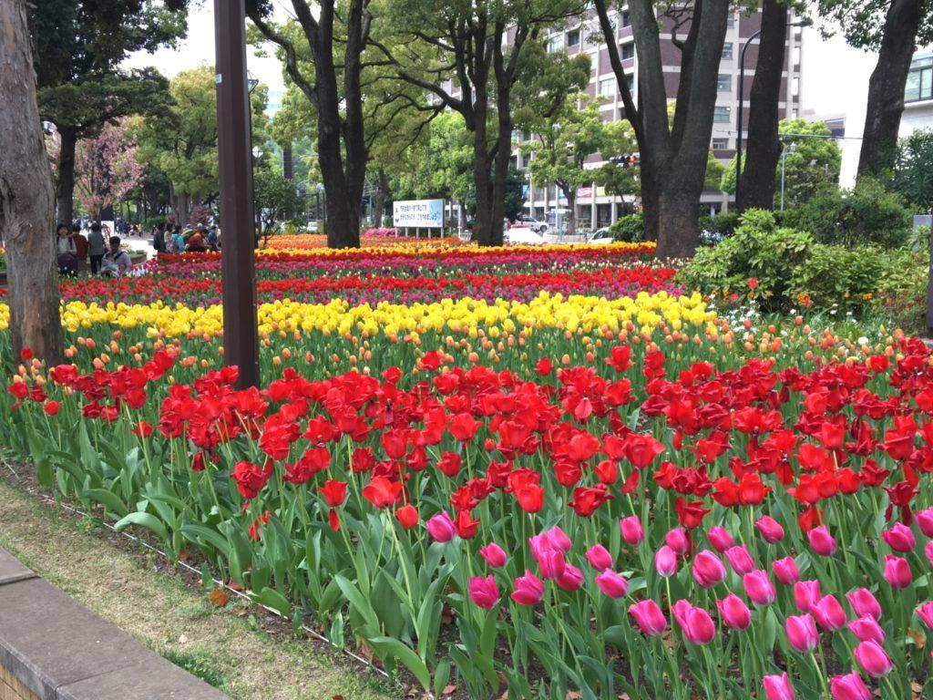 横浜公園の花2
