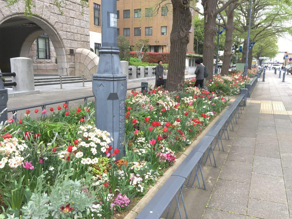 日本大通りの花