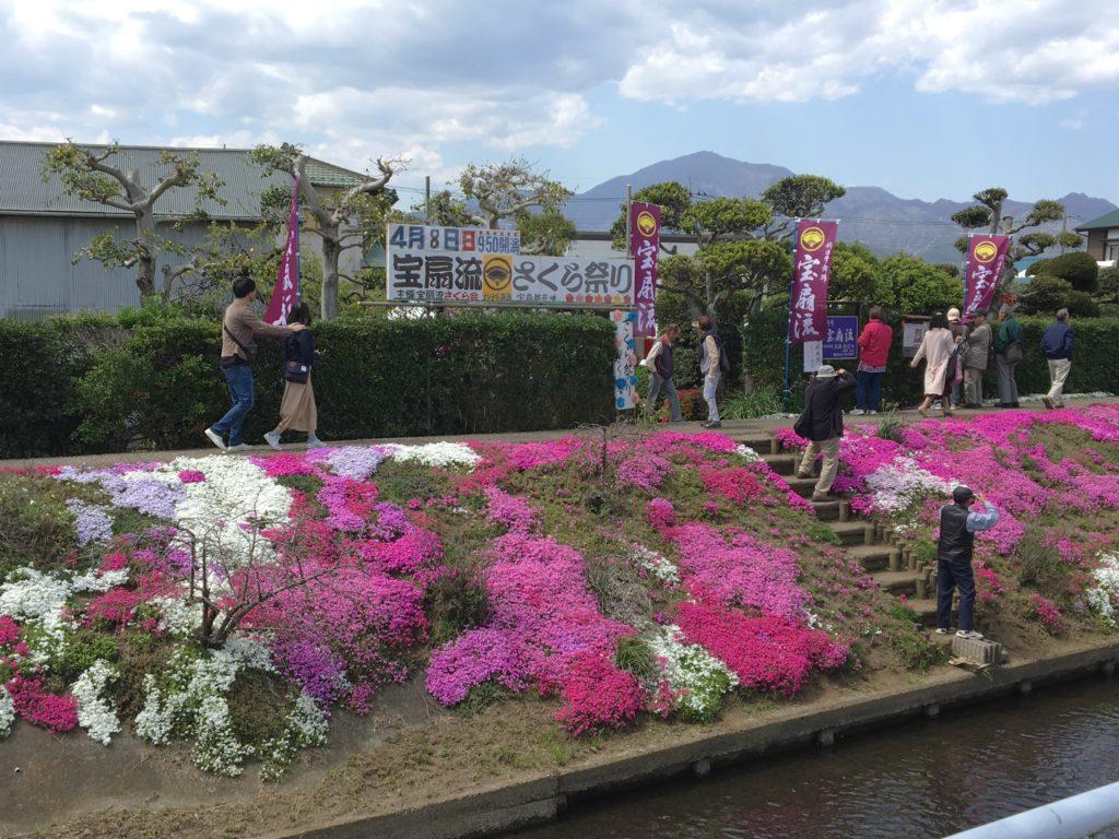 渋田川沿いの芝桜.2