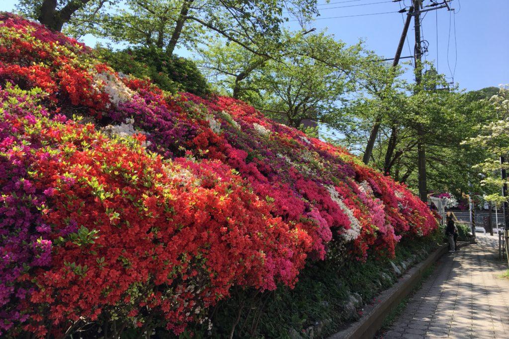 花の木公園2