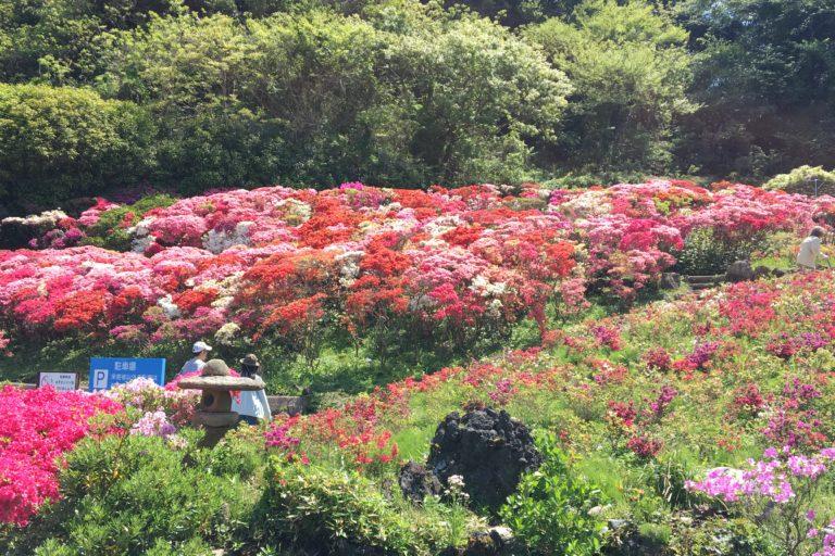 花の木公園4