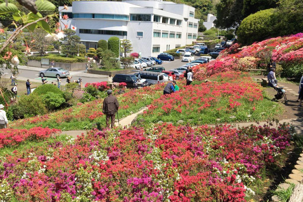 花の木公園5
