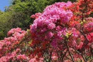 花の木公園6