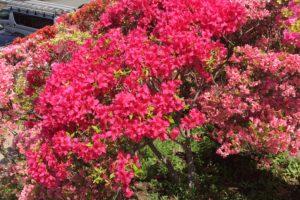 花の木公園7