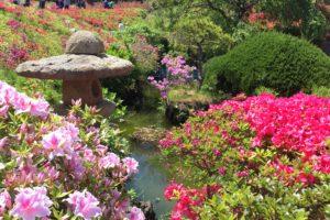 花の木公園9