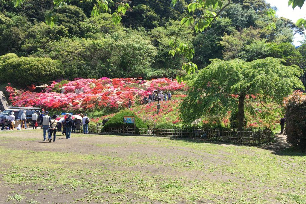 花の木公園3
