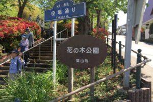 花の木公園1