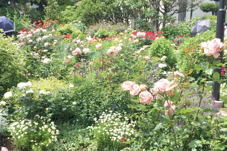 多種な花々