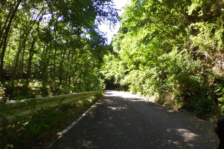 浅間山林道2