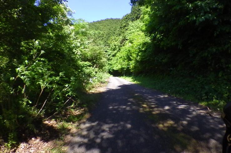 浅間山林道5