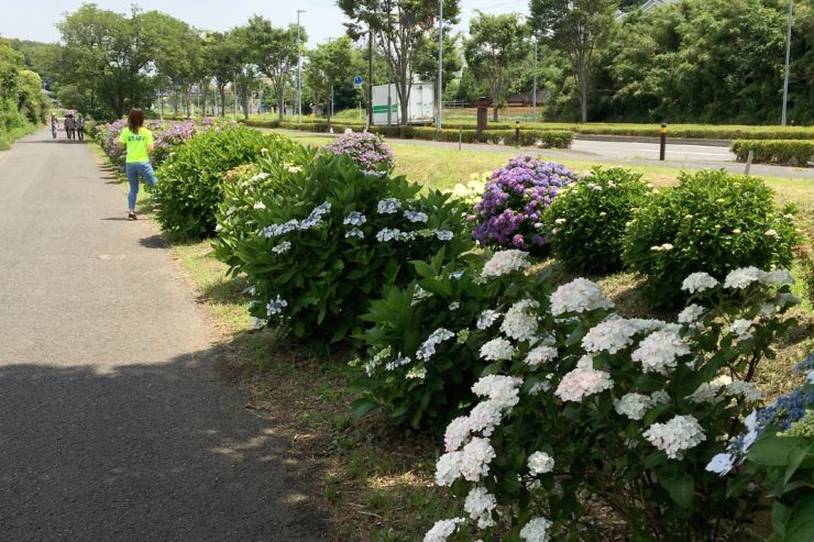 花とせせらぎの道
