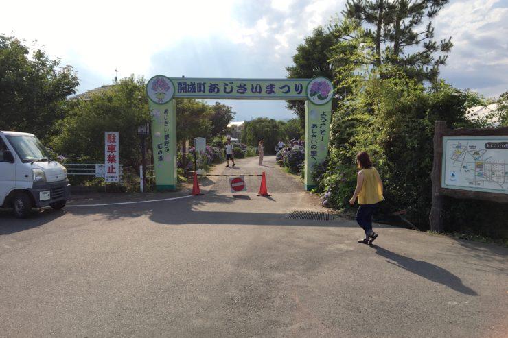 開成町紫陽花入口