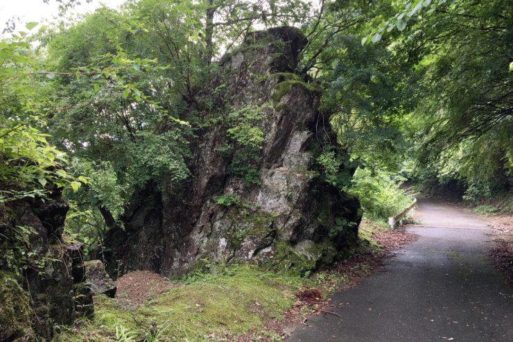 岩に生える樹木