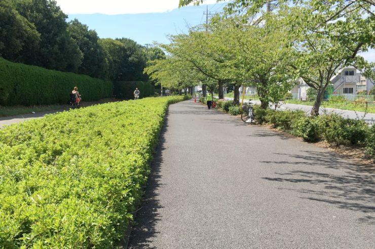 緑の多い道