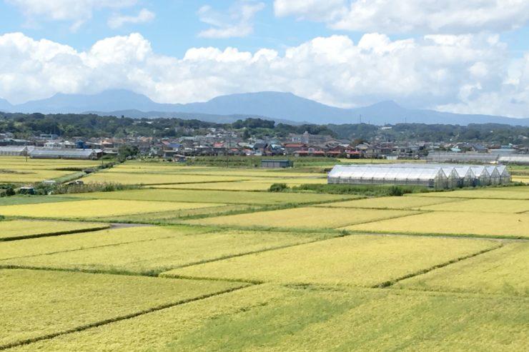 平塚の田んぼ
