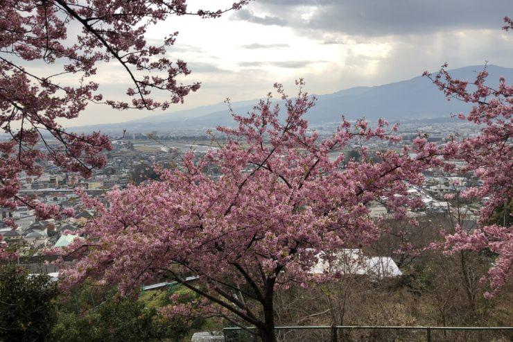 まつだ桜まつりからの景色
