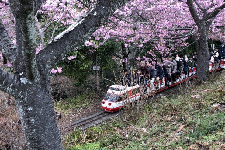 まつだ桜まつりとミニ列車