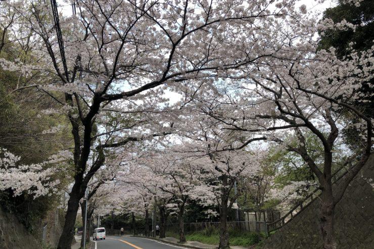 桜山中央公園近く