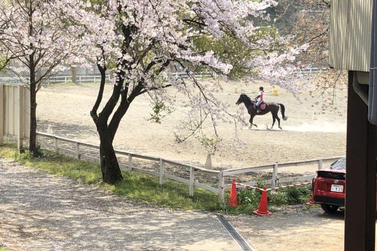 大井松田乗馬クラブ