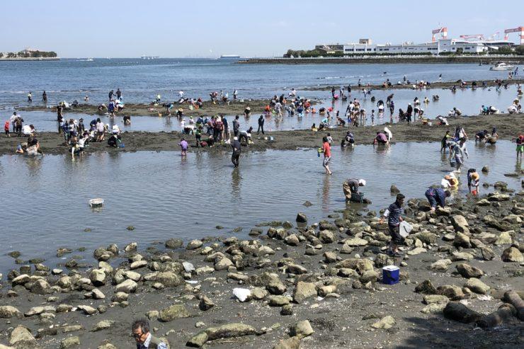 海の公園潮干狩り