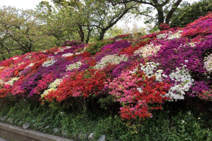 花ノ木公園