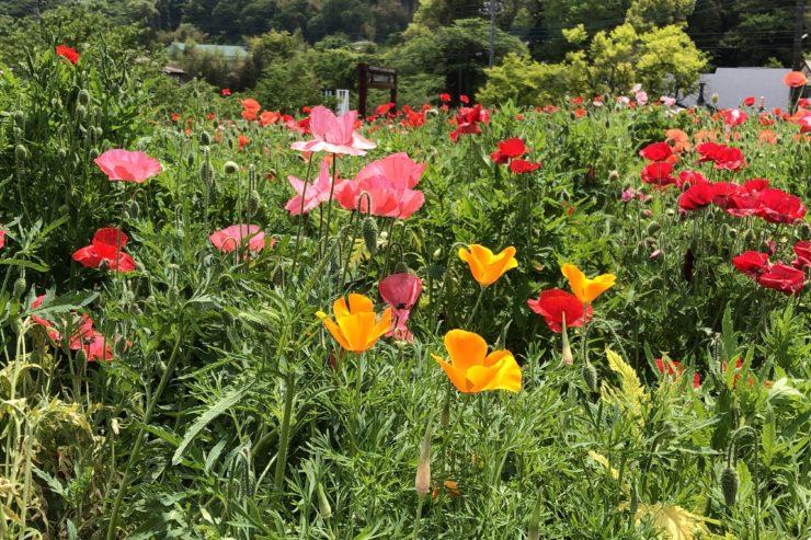 飯山の花の里