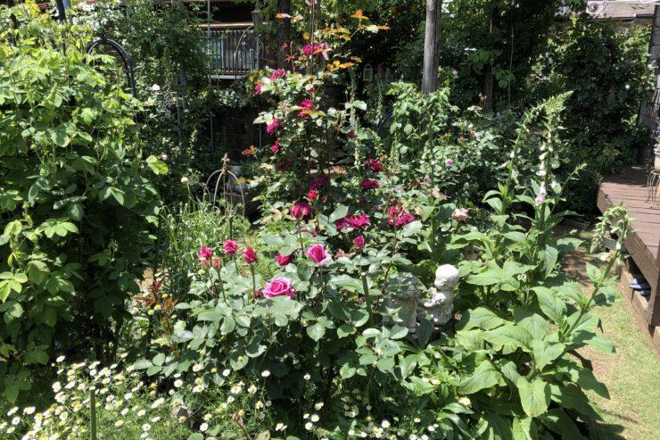 杉本さんのお庭