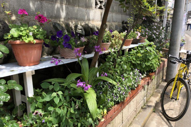 谷本さんのお庭