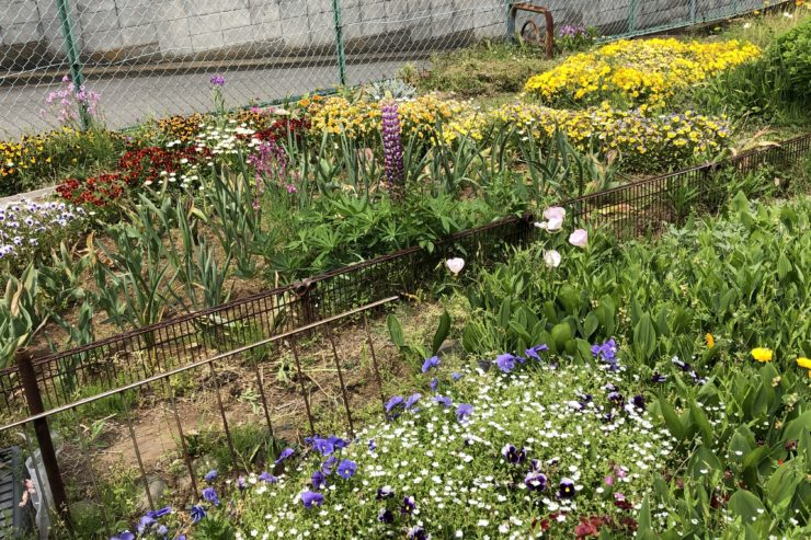 相沢サンサン会の花壇