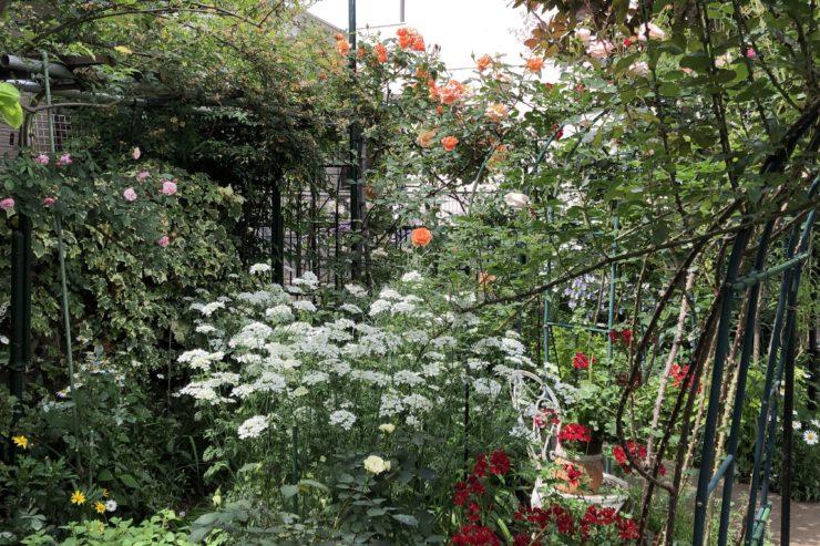 上甲さんのお庭