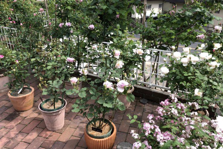 相沢さんのお庭