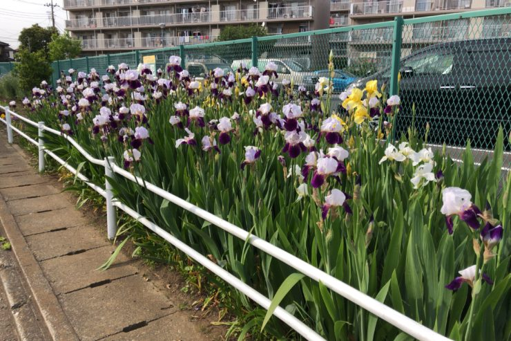四季の会の花壇