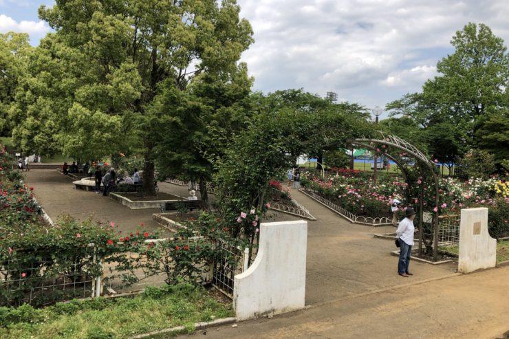光陵公園バラ園