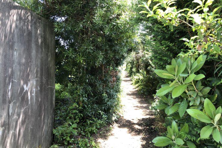 古墳への道