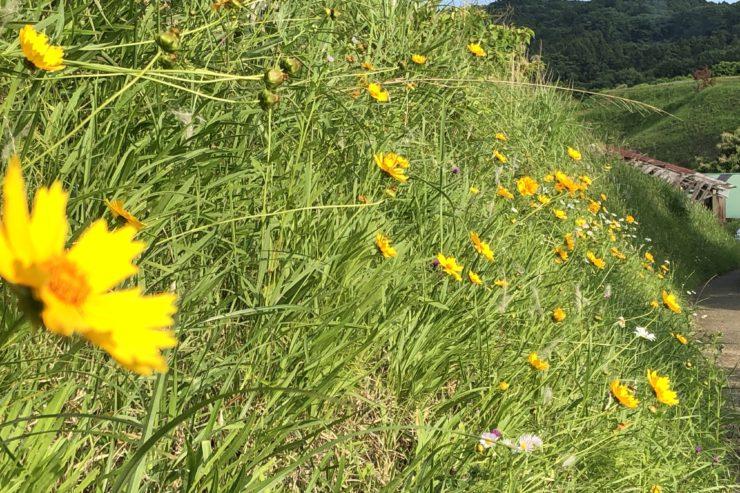 野生の花々