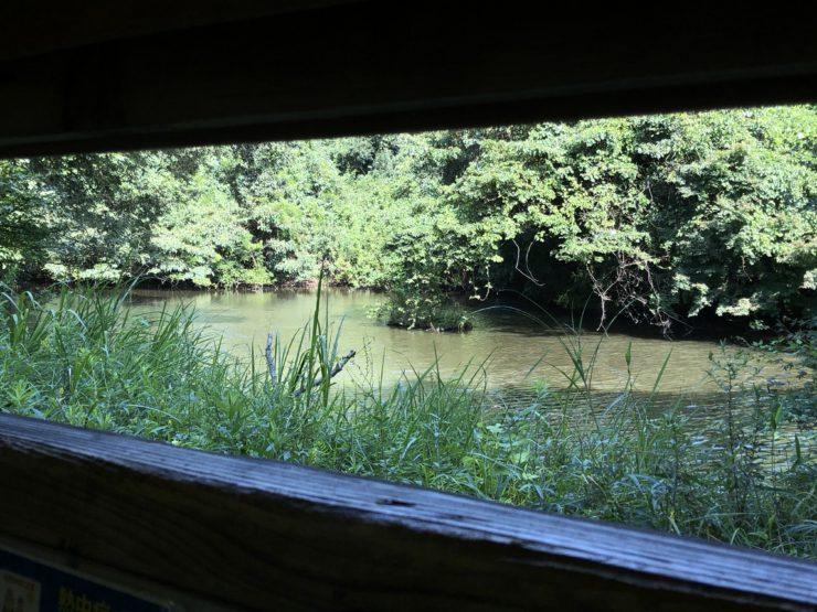 いたち川の源流