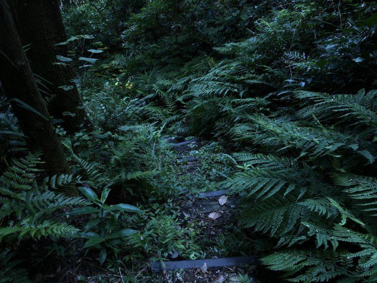 飯島市民の森