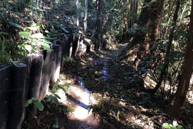 コキアの里への道