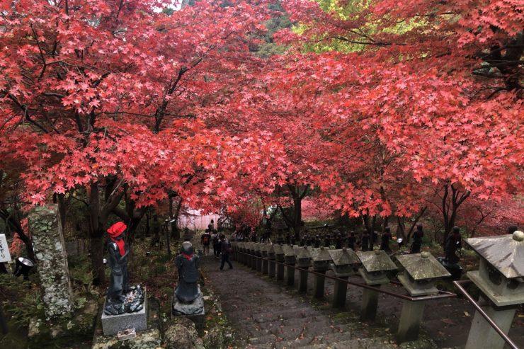大山寺のモミジ