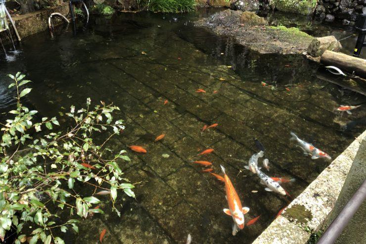 大山寺の池