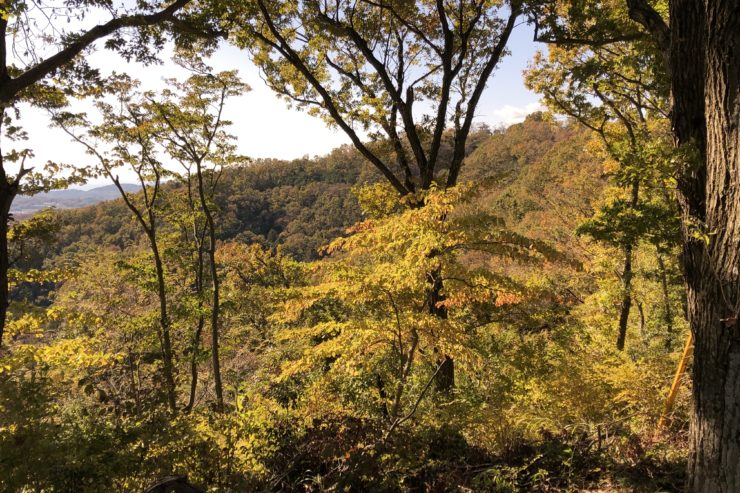 権現山の紅葉