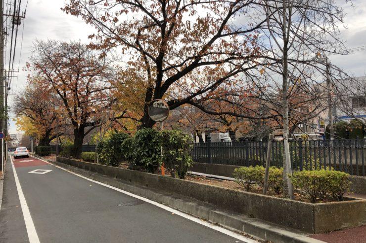 大岡川の紅葉