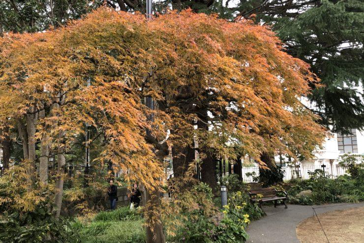 ベーリック・ホールの庭