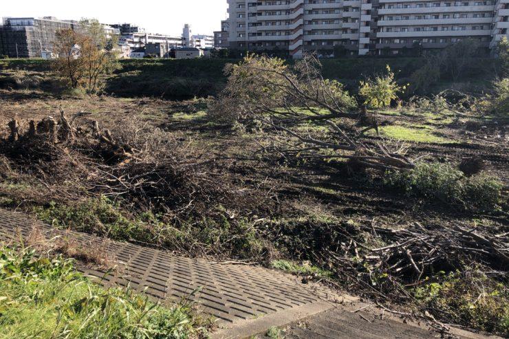 鶴見川の倒木