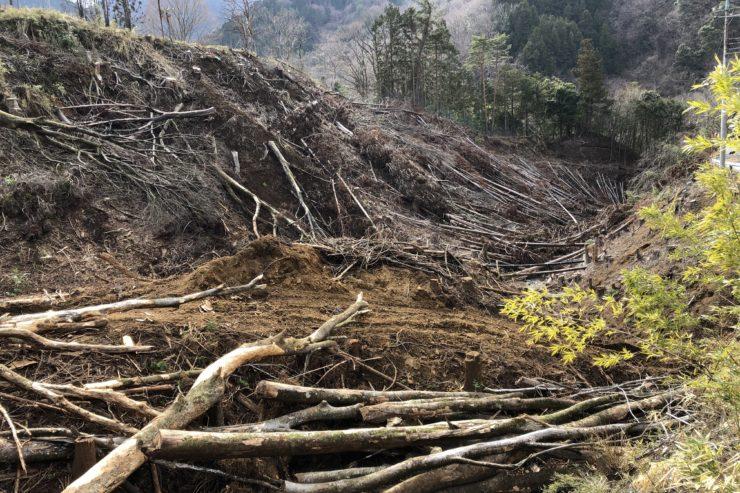 道志川の倒木