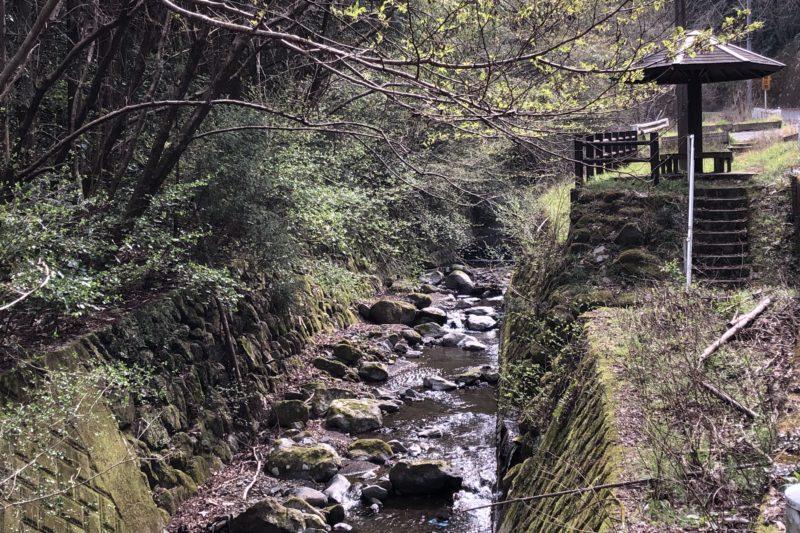 県立21世紀の森への道