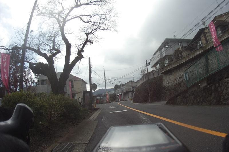 根府川駅のおかめ桜まつり