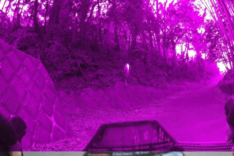 紫色になった写真